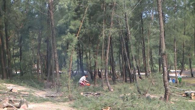 Thừa Thiên - Huế: Nhiều diện tích rừng phòng hộ ven biển bị chặt phá