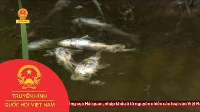 Quảng Nam: Báo động tình trạng ô nhiễm ở khe Đá Mài | Thời Sự | THQHVN