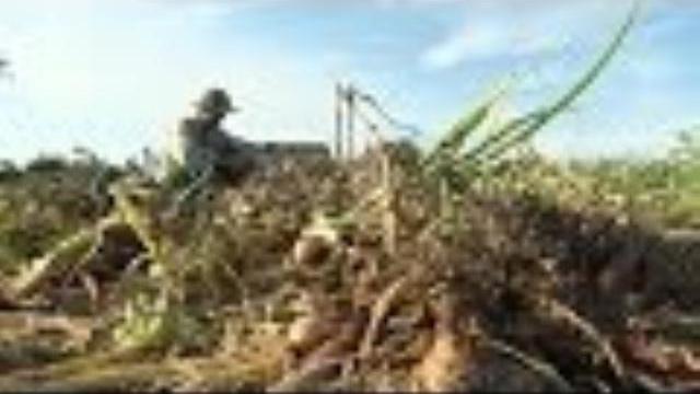Tin Tức 24h Mới Nhất Hôm Nay: Nông dân Lý Sơn mất mùa hành tím