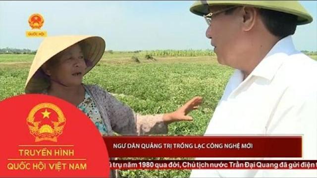 Ngư dân Quảng Trị trồng lạc công nghệ mới | Thời Sự | THQHVN