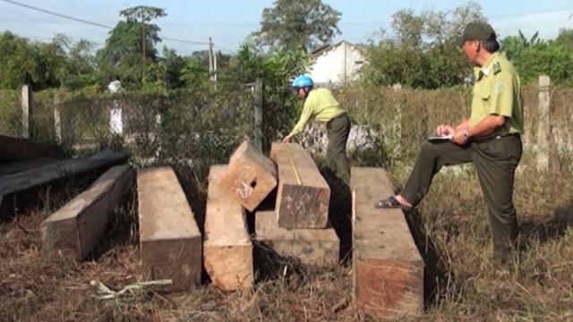 Tin Tức 24h: Truy đuổi xe tải chở 6,6m3 gỗ trái phép tại Phú Yên