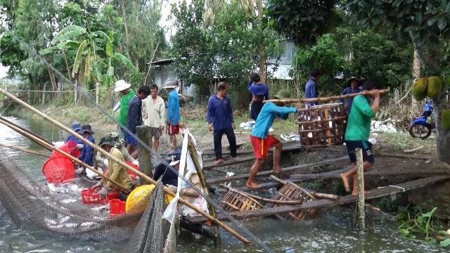 Cần Thơ đẩy mạnh phát triển kinh tế hợp tác xã trong lĩnh vực nông nghiệp, nông thôn