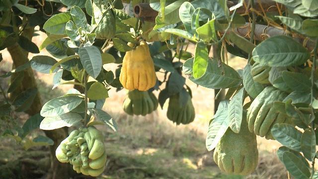 Tiềm năng phát triển sản phẩm du lịch nông nghiệp sinh thái của huyện Phúc Thọ