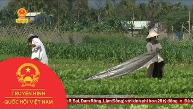 Thời sự - Nâng chuẩn trong nông nghiệp