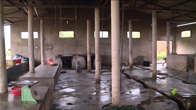 Tin Tức 24h: Bất cập trong quản lý giết mổ gia súc ở Hà Tĩnh