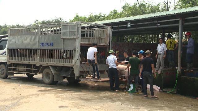 Ngành Chăn nuôi yêu cầu các tỉnh thống kê, giải cứu người chăn nuôi lợn