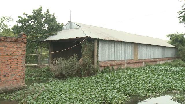 Tin Tức 24h Mới Nhất: Chất thải chăn nuôi - Thiếu sự kiểm soát