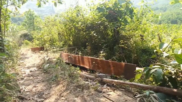 Quảng Nam khẩn trương kiểm tra, xử lý nghiêm vụ phá rừng tại huyện Bắc Trà My