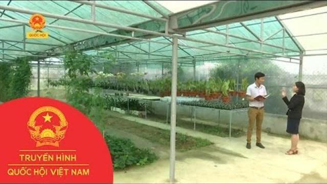Thời sự - Thừa Thiên - Huế: Ứng dụng công nghệ nuôi cấy tế bào trồng hoa lan