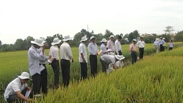 Hậu Giang liên kết tháo gỡ khó khăn phát triển nông nghiệp