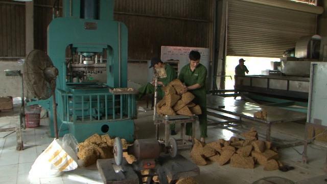 Quảng Trị cần quy hoạch các nhà máy chế biến cao su gắn với vùng nguyên liệu