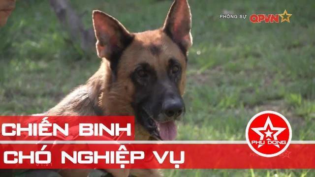 Chó nghiệp vụ: Những chiến binh dũng mãnh trong Quân đội Việt Nam