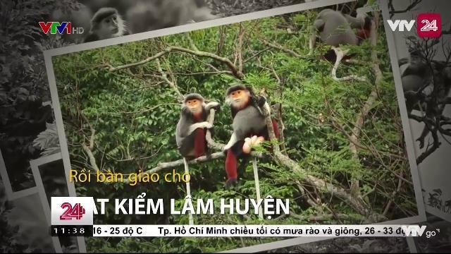 Thả về rừng cá thế Vooc quý hiếm - Tin Tức VTV24