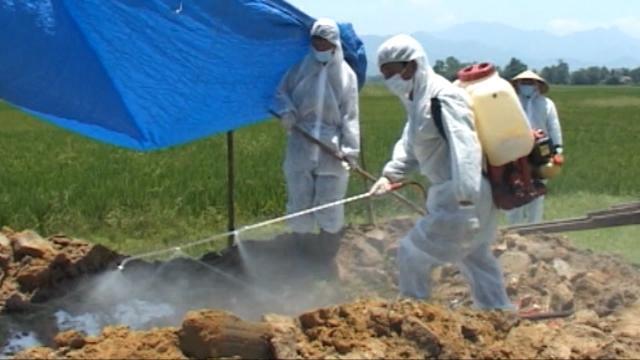 Thừa Thiên - Huế phát hiện và tiêu hủy đàn vịt hơn 6.500 con do cúm A/H5N6