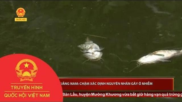 Quảng Nam: Chậm xác định nguyên nhân gây ô nhiễm   Thời sự   THQHVN