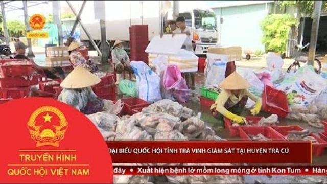 Thời sự - Đoàn Đại biểu Quốc hội tỉnh Trà Vinh giám sát tại huyện Trà Cú