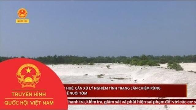 Thời sự - Thừa Thiên - Huế: Cần xử lý nghiêm tình trạng lấn chiếm rừng phòng hộ để nuôi tôm