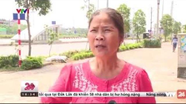 Cây cối chết khô trên đường phố Hà Nội | VTV24