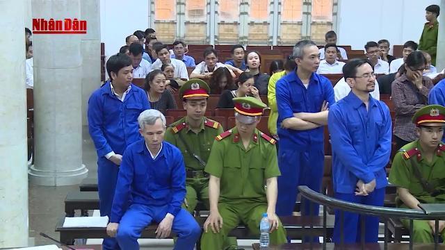 Tin Tức 24h: Phạt tù 11 bị cáo trong vụ lập khống dự án trồng rừng