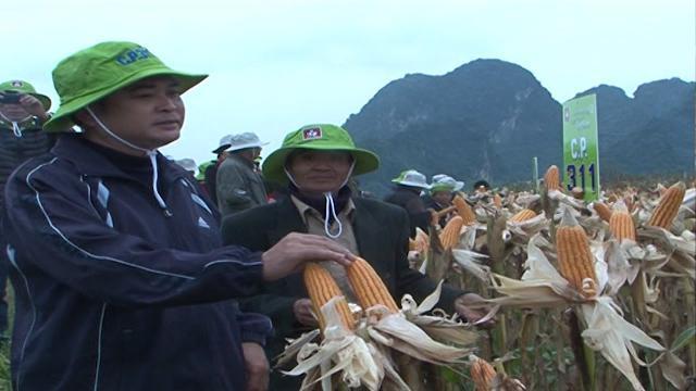 Gỡ khó cho nhà nông để chuyển đổi cơ cấu cây trồng, vật nuôi