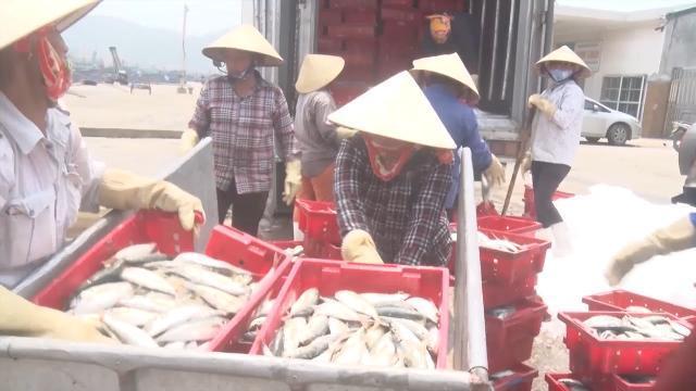 Tin Tức 24h Mới Nhất Hôm Nay: Ngư dân Nghệ An được mùa cá biển