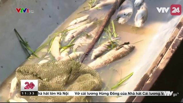 Cá Nuôi Lồng Bè Trên Sông Bồ Chết Hàng Loạt - Tin Tức VTV24