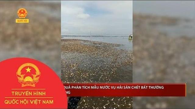 Đã có kết quả phân tích mẫu nước vụ hải sản chết bất thường ở Kiên Giang