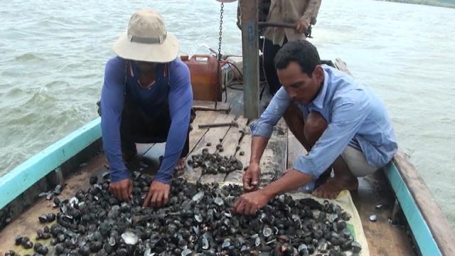 Vẫn chưa xác định được nguyên nhân thủy sản chết hàng loạt tại Kiên Giang