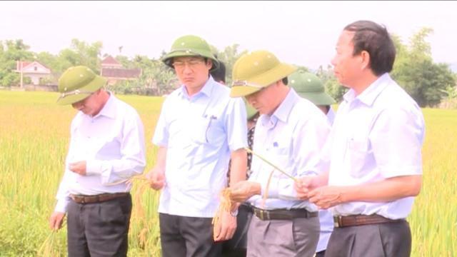 Hơn 5.200 ha diện tịch lúa xuân ở Hà Tĩnh bị nhiễm do bệnh đạo ôn