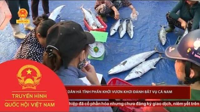 Ngư dân Hà Tĩnh phấn khởi vươn khơi đánh bắt vụ cá Nam