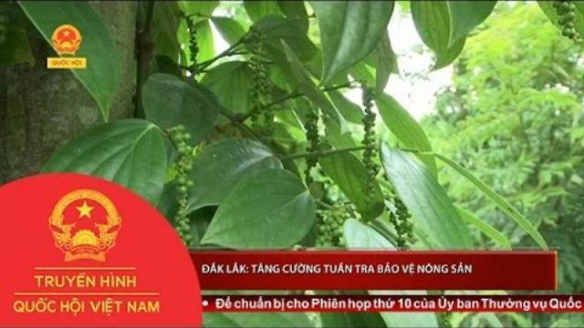 Thời sự - Đắk Lắk: Tăng cường tuần tra bảo vệ nông sản