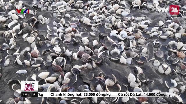 Kiên Giang: Đã có kết quả phân tích mẫu nước tại khu vực hải sản chết bất thường | VTV24