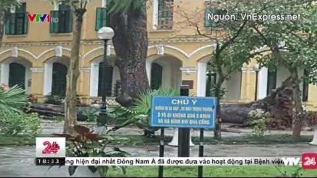 Cây Đổ Làm 4 Em Học Sinh Bị Thương Tại Hà Nội - Tin Tức VTV24