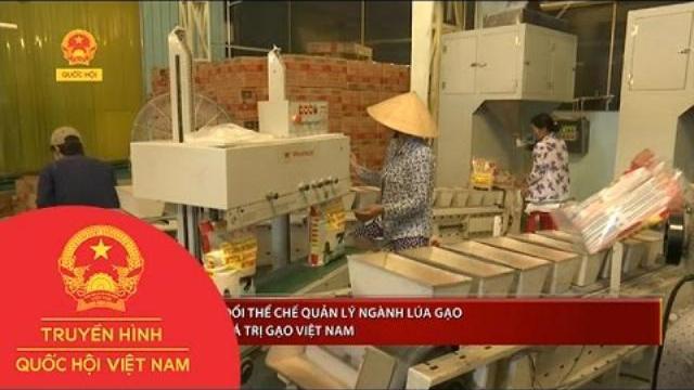 Thới sự - Cần thay đổi thể chế quản lý ngành lúa gạo và chuỗi giá trị gạo Việt Nam