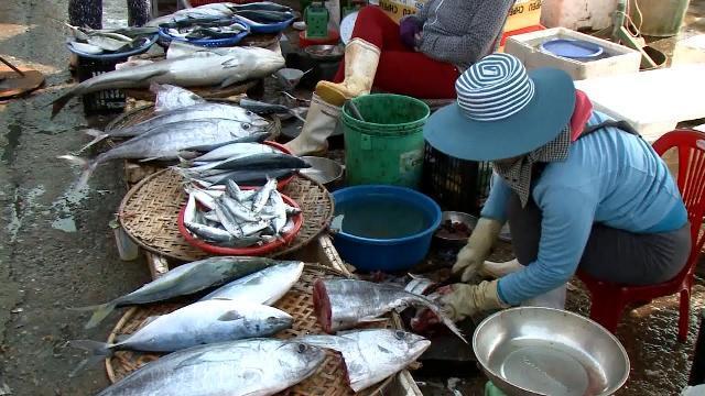 Nghề cá Quảng Bình phục hồi mạnh mẽ sau 1 năm sự cố môi trường Formosa