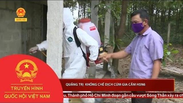 Thời sự - Quảng Trị khống chế dịch cúm gia cầm H5N6