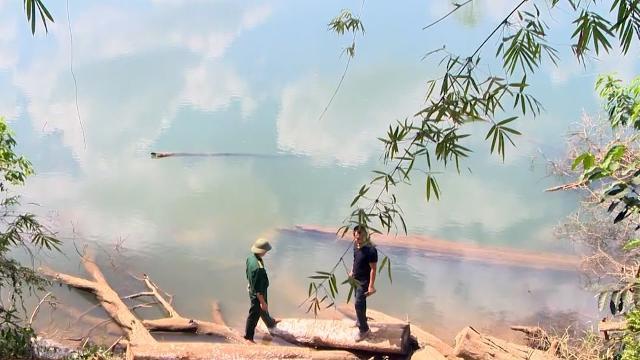 Gia Lai bắt quả tang vụ khai thác, vận chuyển gỗ lậu tại biên giới