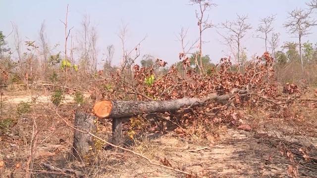 Lâm tặc ngang nhiên phá rừng tự nhiên ở huyện Ea Súp, Đác Lắc