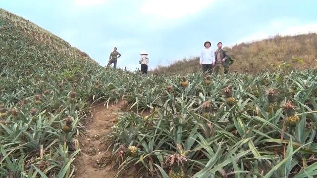 Lào Cai yêu cầu Công ty CP Tứ Đỉnh phải bồi thường thiệt hại cho người dân trước ngày 20/4/2017