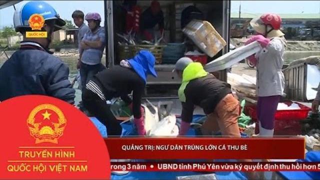 Thời sự - Quảng Trị: Ngư dân trúng lớn cá thu bè