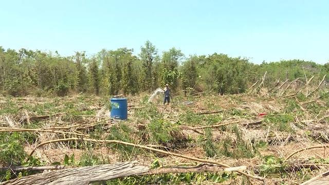 Tin tức 24h: Mưa lớn, lốc xoáy gây thiệt hại lớn ở Bình Phước