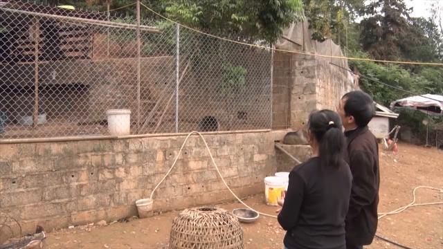 Tin Tức 24h Mới Nhất: Cao Bằng phát hiện 2 ổ dịch bệnh cúm gia cầm