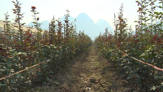 Sơn La tăng cường các giải pháp trong xây dựng nông thôn mới