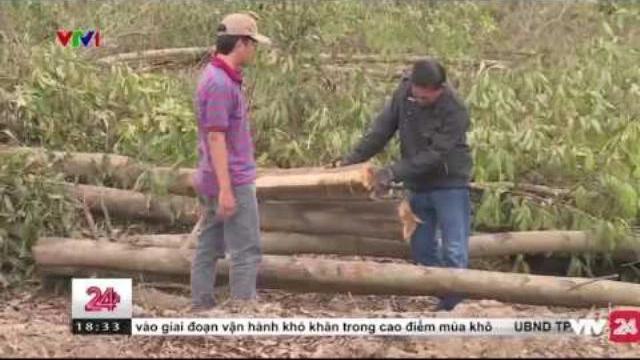 40.000 cây tràm bị chặt hạ chỉ sau 1 đêm tại Đồng Nai | VTV24