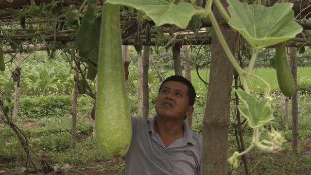 Tin Tức 24h: Người nông dân dân tộc Tày ở Cao Bằng làm kinh tế giỏi