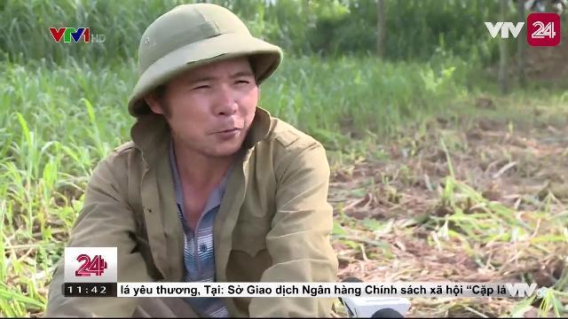 Miwon Việt Nam trả lời về dung dịch lạ dùng trong nông nghiệp - Tin Tức VTV24