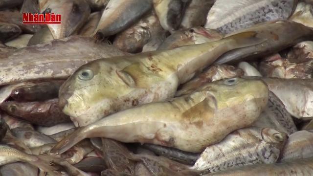 Nghệ An: Thu giữ 4 tấn cá nục thối sắp về xưởng chế nước mắm