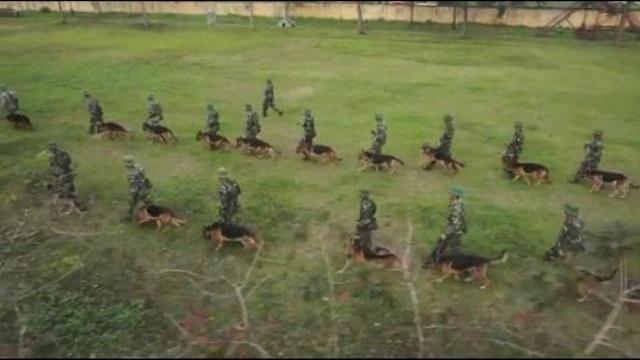 Chó nghiệp vụ Quân đội Việt Nam được đào tạo như thế nào?