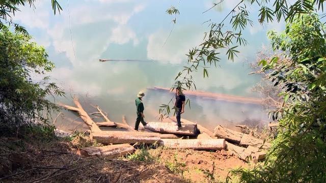 Tin Tức 24h: Gia Lai chỉ đạo khởi tố vụ phá rừng tại biên giới
