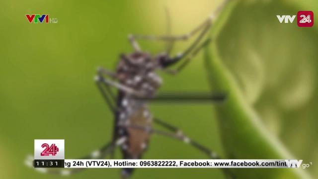 Những căn bệnh do muỗi và cách phòng tránh | VTV24